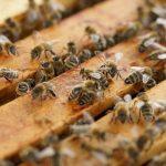 Wie gut sind Sie auf den Bienenraub vorbereitet?