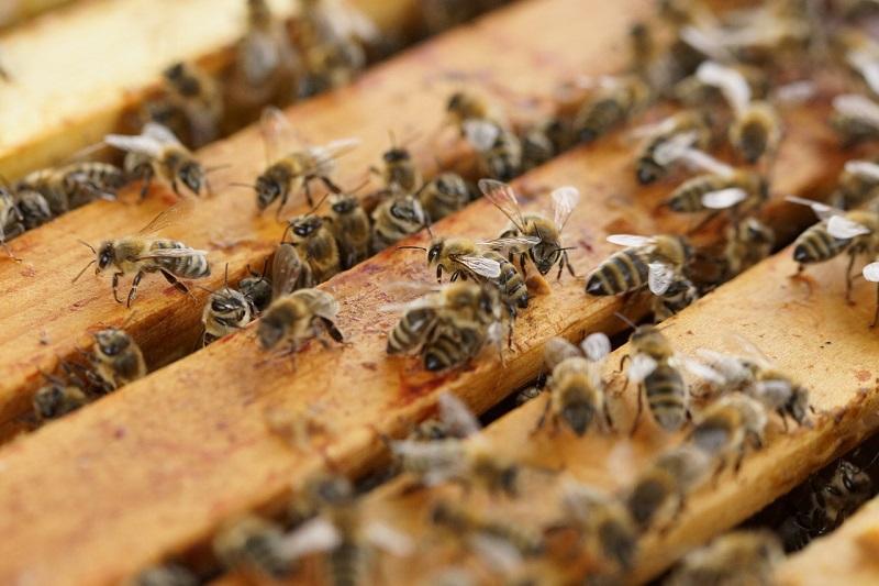 Vermeidung von Bienenraub